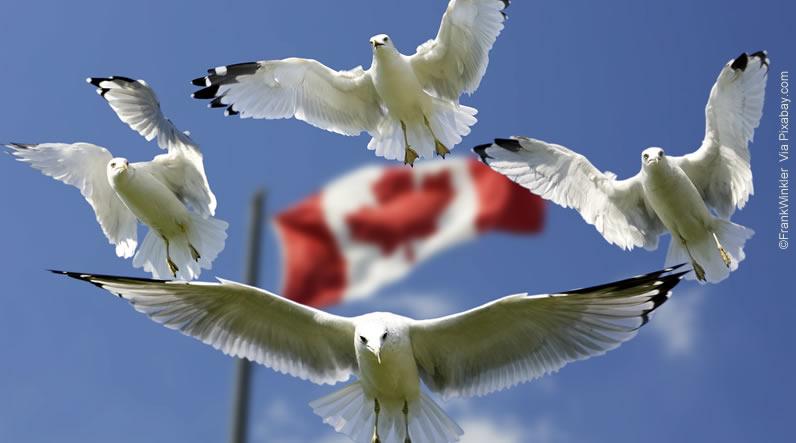 Viajar para o Canadá -Dúvidas sobre o eTA (Autorização Eletrônica de Viagem)